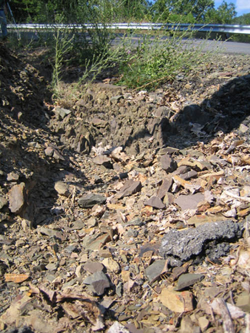 Shale Debris With Fossils