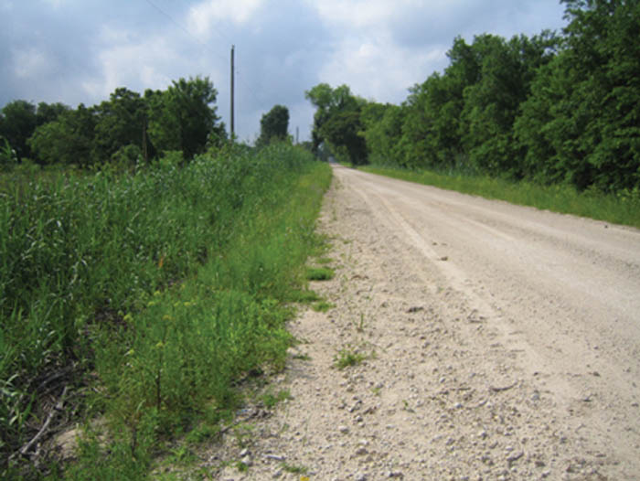 a photo of the loose gravel limestone roads and the fossil containing gravel that is scattered across Texas